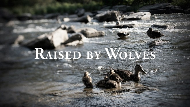 raised by wolves wallpaper ducks 660x371 RAISED BY WOLVES WALLPAPERS