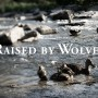 raised-by-wolves-wallpaper-ducks thumbnail